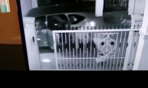 Kamera CCTV pemilik anjing mereka aksi biadab komplotan penculik anjing rumahan.