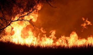 Ilustrasi Kebakaran Hutan