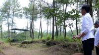 Presiden Jokowi Lepaskan Sepasang Elang Jawa diberi nama Abu dan Rossy di Taman Nasional Gunung Merapi