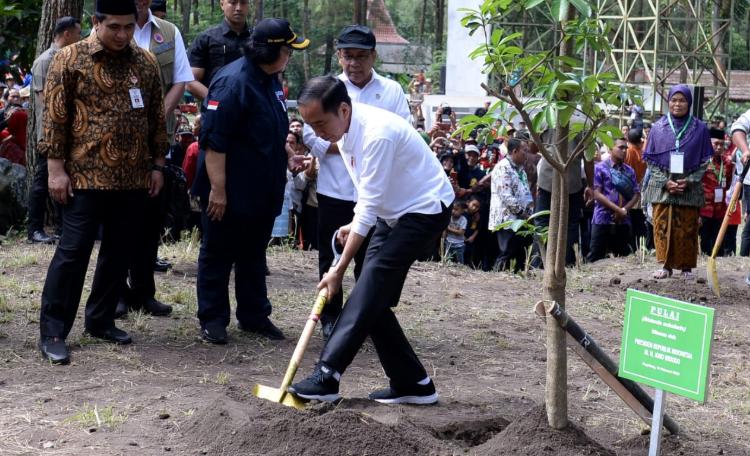 Presiden Jokowi Tanam Pohon Alstonia Scholaris Kurang Lebih Tiga Meter di Taman Nasional Gunung Merapi