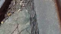 Cacing keluar dari dalam tanah terjadi di Pasar Gede Solo, Jawa Tengah.