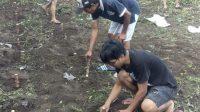 Penanaman Ketela Ubi untuk menghadapi situasi terburu Pandemi Covid-19. (Foto: Istimewa)
